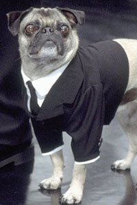 Frank the Pug is an extra-terrestrial living on Earth in New York City. Tim Blaney in the Men in Black trilogy portrays the character of Frank. Disguised as a pug, his actual species is the Remoolian. It is unknown what planet they hale from, but since Frank lives on Earth without the aide of a […]